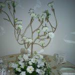 Düğün Dilek Ağacı Kiralama