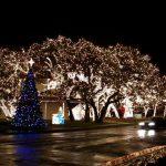 Ağaç Işık Süsleme