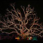Ağaç Işık Süslemesi